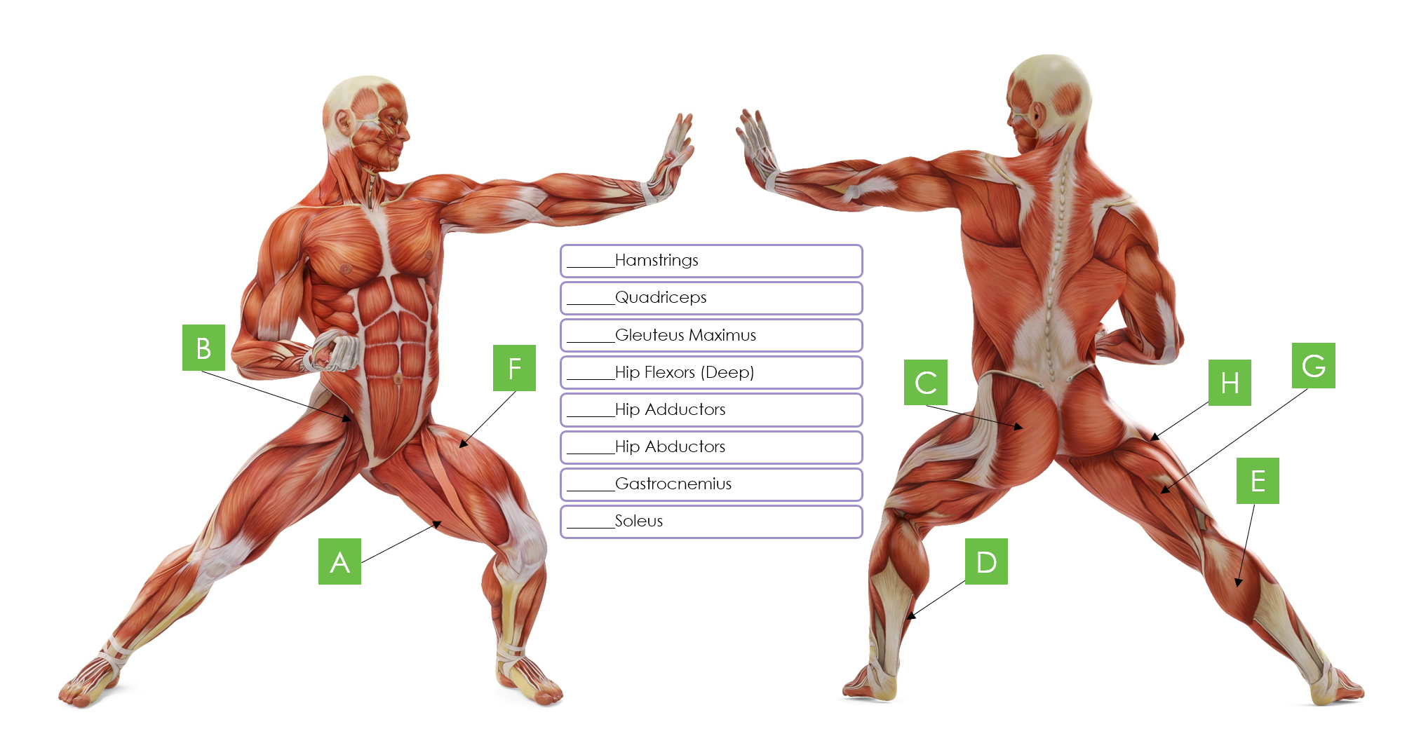 Lower Body Muscle Matching Guide