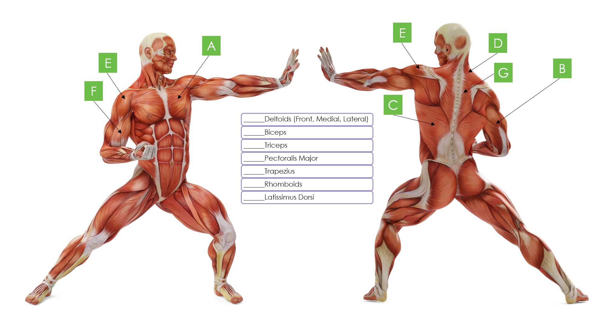 Exercise Science for Fit Pros: Understanding Muscle Anatomy 2